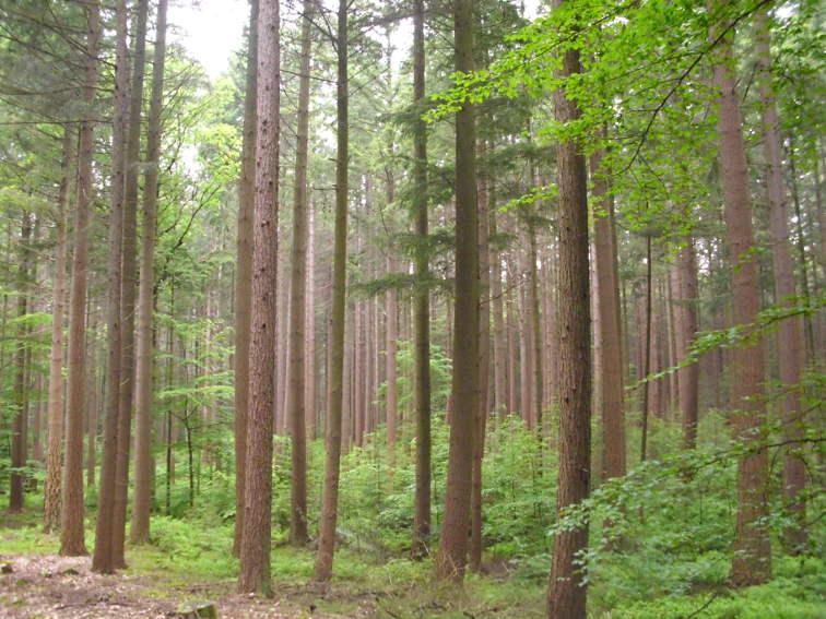 Waldbau